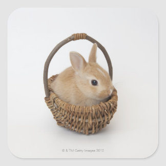 Un conejo está en una cesta. Enano de Netherland Pegatina Cuadrada