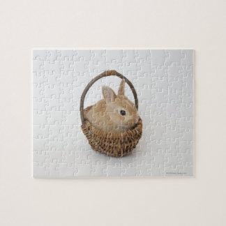 Un conejo está en una cesta. Enano de Netherland Puzzles Con Fotos