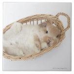 Un conejo está en una cesta. Holanda Lop. Azulejo Cuadrado Grande