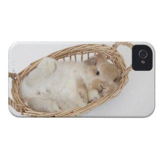 Un conejo está en una cesta. Holanda Lop. Case-Mate iPhone 4 Cobertura