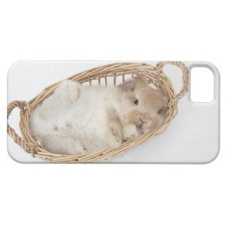 Un conejo está en una cesta. Holanda Lop. iPhone 5 Carcasas