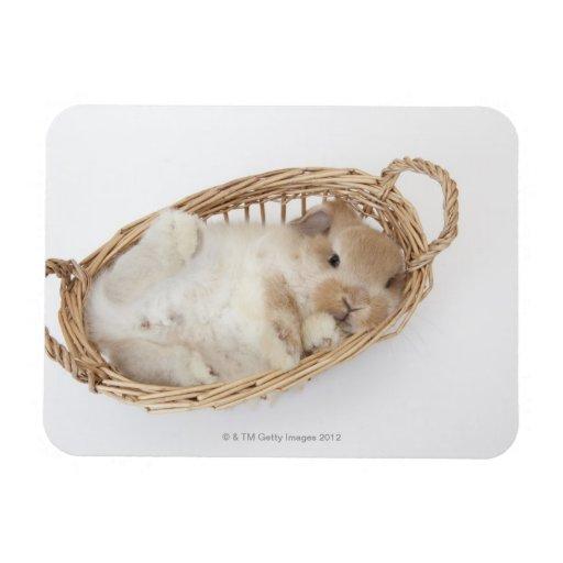Un conejo está en una cesta. Holanda Lop. Imán Rectangular