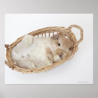 Un conejo está en una cesta. Holanda Lop. Impresiones