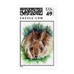 Un conejo salvaje, bosquejo del lápiz de la franqueo
