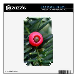 Un cono de un tejo (baccata de la taxus) calcomanías para iPod touch 4G