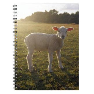 Un cordero en el ajuste del Sun Suecia Note Book