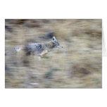 Un coyote corre a través de la ladera que mezcla e tarjeta de felicitación