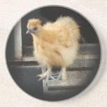 un cuadro pequeno hermoso del pollo de Silkie Posavaso Para Bebida