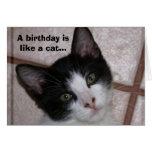 Un cumpleaños es como un gato… tarjeta de felicitación