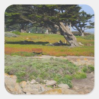 Un Cypress en vista al mar Pegatina Cuadrada