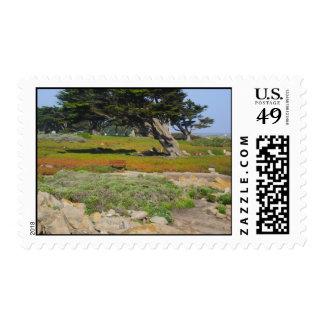 Un Cypress en vista al mar Sello