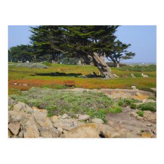 Un Cypress en vista al mar Postales