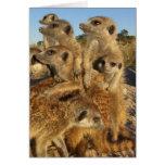 Un deseo de Kalahari - tarjeta de felicitaciones