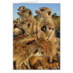 Un deseo de Kalahari - tarjeta de felicitaciones d