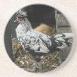 un diseño maravilloso de un pájaro exótico hermoso posavasos manualidades