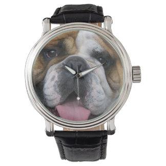 Un dogo inglés en Bélgica Reloj