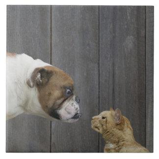 Un dogo y un gato son cara a cara en un soporte azulejos ceramicos