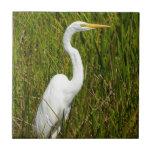 Un Egret blanco en el pantano Azulejo Cuadrado Pequeño