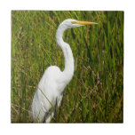 Un Egret blanco en el pantano Teja Ceramica