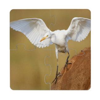 Un Egret de ganado (Bubulcus Ibis) desciende Posavasos De Puzzle