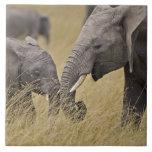 Un elefante africano que pasta en los campos del tejas  ceramicas