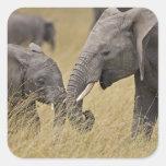 Un elefante africano que pasta en los campos del colcomania cuadrada
