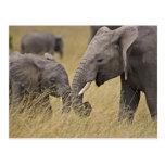 Un elefante africano que pasta en los campos del postal