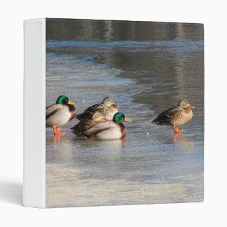 Un equipo de patos