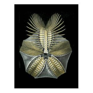 Un erizo de mar fósil tarjeta postal