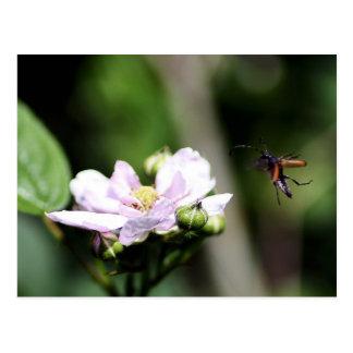 Un escarabajo del fonolocalizador de bocinas postales