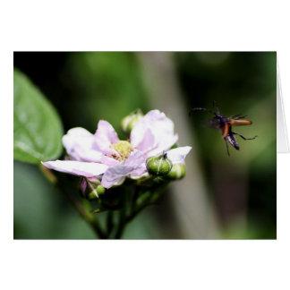 Un escarabajo del fonolocalizador de bocinas tarjeta de felicitación