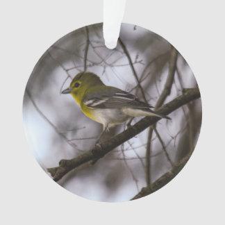 Un especie de ave Amarillo-throated