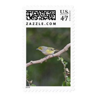 un especie de ave blanco-observado (griseus de un timbre postal