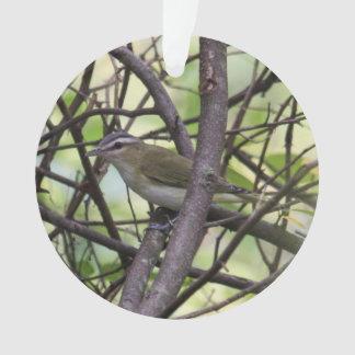 Un especie de ave Rojo-observado