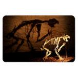 Un esqueleto animal en museo iman flexible