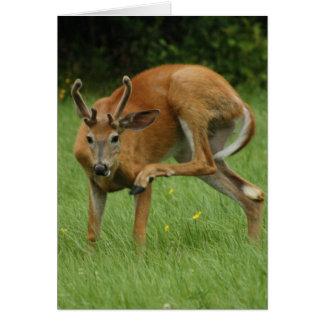 Un estimado Deer Itch Tarjeta De Felicitación