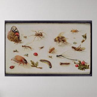 Un estudio de insectos impresiones