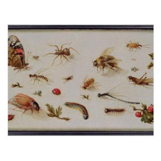 Un estudio de insectos postal