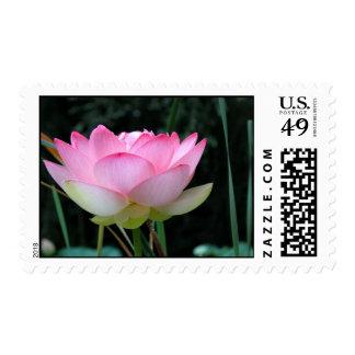 Un franqueo de apertura de Lotus Sello