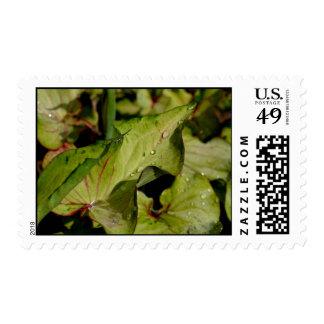 Un franqueo de hadas de la piscina timbres postales
