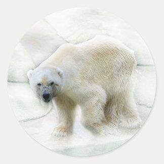 Un frío helado de los osos polares pegatina redonda