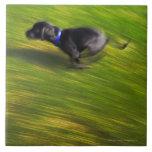 Un funcionamiento del perro negro azulejos cerámicos