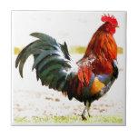 Un gallo azulejo