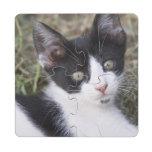 Un gatito blanco y negro del gato en el jardín