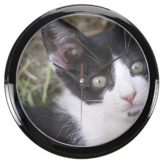 Un gatito blanco y negro del gato en el jardín reloj acuario