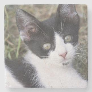 Un gatito blanco y negro del gato en el jardín posavasos de piedra