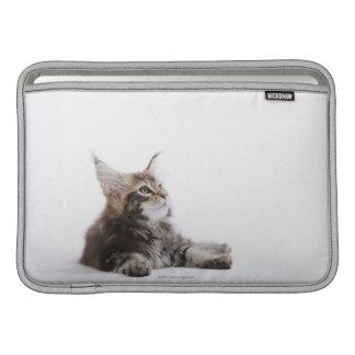 Un gatito del gato de Coon de Maine Funda MacBook