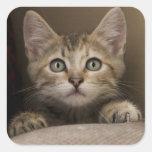 Un gatito muy dulce del Tabby Pegatina Cuadrada