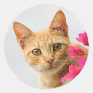 Un gatito rojo lindo del tabby le está mirando pegatina redonda