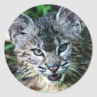 Un gatito sonriente del lince pegatina redonda